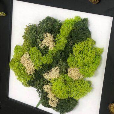 tablou cu licheni o frunza kalia flowers 2