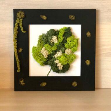 tablou cu licheni o frunza kalia flowers 1
