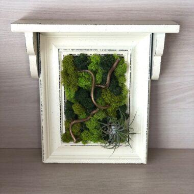 polita licheni naturali kalia flowers 1